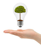 Hand and bulb with tree. Isolated on white background Royalty Free Stock Images