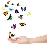 Hand and Butterflies Royalty Free Stock Photography