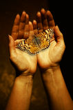 Hand and butterfly. Sepia toned open female hands with a monarch butterfly as concept for creation Royalty Free Stock Photos