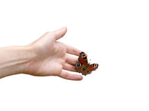 Hand and a butterfly Stock Photos