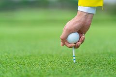 Hand caddy hold Golf ball with tee ready to be shot at golf court.  royalty free stock photos