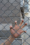 Hand in the cage. Left human hand in the cage Stock Images