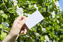 Hand with card and blossom Royalty Free Stock Images