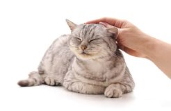 Free Hand Caress The Cat Royalty Free Stock Photography - 134497477
