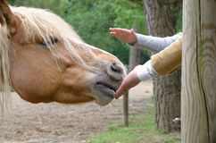 Hand that caresses the horse Stock Photos