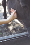 A hand caresses the horses Royalty Free Stock Images
