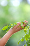 Hand caring plant Royalty Free Stock Images