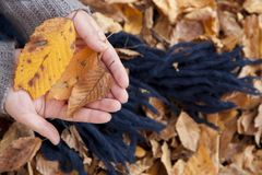 Hand carrying leaves Stock Photos