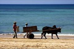 Hand cart  people dustman lagoon Royalty Free Stock Photography