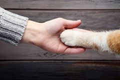 Hand with cat paw. Female hand with cat paw on grey background Royalty Free Stock Images