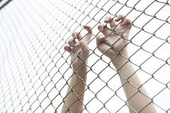 Hand catching mesh cage. The prisoner want freedom. Dramatic Blurry Hands catching mesh cage. The prisoner want freedom.Man lack of Independence Stock Images
