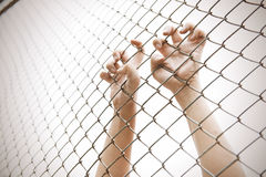 Hand catching mesh cage. The prisoner want freedom. Royalty Free Stock Photo