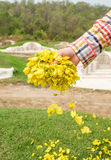 Hand caucasian men scattering flower marigold down on grass royalty free stock images
