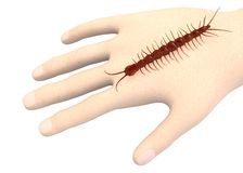 Hand with centipede Royalty Free Stock Image