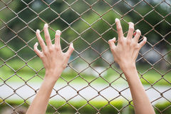 Hand and chain link fence royalty free stock photography