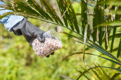 Hand with chemical fertilizers Stock Images