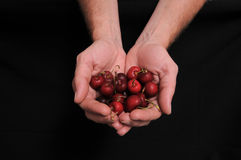 Hand and Cherries. An Hand Holding Some Cherries on a Black Background Stock Photography