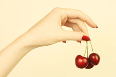Hand with cherry. Ripe cherries in the woman's hand with red nails Stock Photography