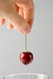 Hand with a cherry Royalty Free Stock Photography