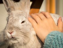 Hand of a child caressing a white rabbit. In sunlight stock photo