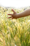 A hand of child in field Royalty Free Stock Photo