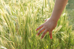 A hand of child in field Stock Photo