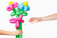 The hand of the child gives flowers from the balloons of the mother. White background. Hand of the child gives flowers from balloons to mother on a white Royalty Free Stock Photo
