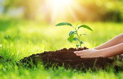 Hand of a child with shovel taking care of a seedling in the soil. Hands of a child taking care of a seedling in the soil. New sprout on sunny day in the garden royalty free stock images