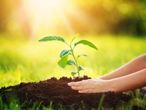 Hand of a child with shovel taking care of a seedling in the soil Royalty Free Stock Images