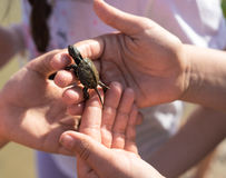 Hand of children holding cute newborn baby turtle Royalty Free Stock Image