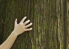 Hand clawing at tree trunk. A hand grips the trunk of a tree Royalty Free Stock Photos