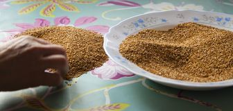 Hand cleaning sesame seeds on a table stock image