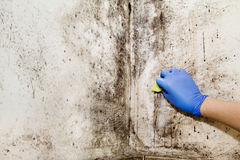 Hand Cleans Mold In The House Stock Images
