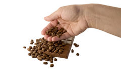 Hand and coffee beans Royalty Free Stock Image
