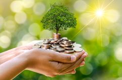 Hand Coin tree The tree grows on the pile. Saving money for the future. Investment Ideas and Business Growth. Green background wit. H bokeh sun