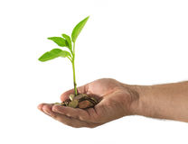 Hand with coins and a green plant. Growing Royalty Free Stock Images