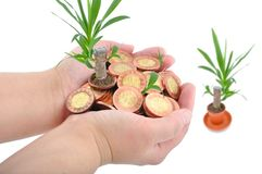 Hand and coins with plant Stock Images