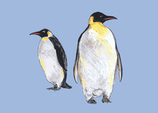 Hand colored drawing of penguins. Vector illustration Stock Photos