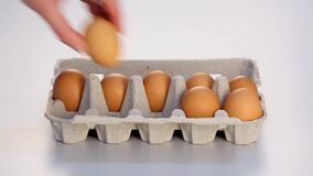 Hand completing carton of eggs stock footage