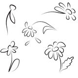 Hand contour simple drawing of daisies Royalty Free Stock Photos