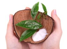 Hand cream in coconut shell. With leaves in woman hands stock image