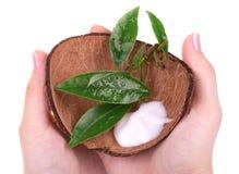 Hand cream in coconut shell Stock Image