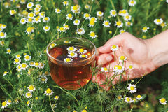 Hand with cup of herbal tea and chamomile Royalty Free Stock Photos