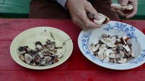 Hand cut orange cap boletus mushroom two half pieces knife stock footage