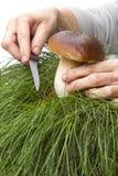 Hand cuts porcini mushrooms Stock Photos