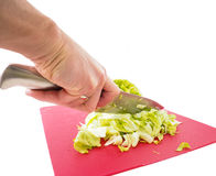 Hand cutting fresh green lettuce salad Stock Photography