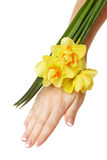 Hand and daffodils Stock Photography