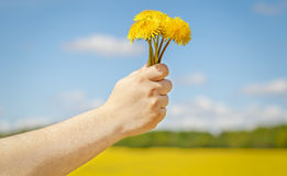 Hand with dandelion Stock Images
