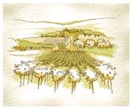 Hand - de gemaakte gebieden en de wijngaarden van de schetsdruif Stock Afbeelding
