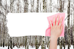 Hand deletes bare trees in winter forest by rag Stock Photos